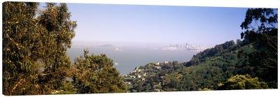 Trees on a hill, Sausalito, San Francisco Bay, Marin County, California, USA #2 Canvas Print #PIM6471