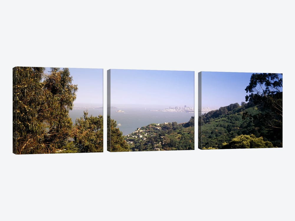 Trees on a hill, Sausalito, San Francisco Bay, Marin County, California, USA #2 by Panoramic Images 3-piece Art Print