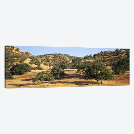 Hillside Landscape, Stanislaus County, California, USA Canvas Print #PIM6472} by Panoramic Images Art Print