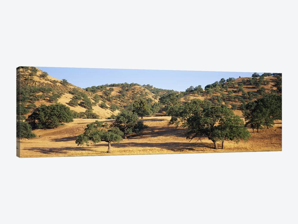 Hillside Landscape, Stanislaus County, California, USA by Panoramic Images 1-piece Canvas Artwork