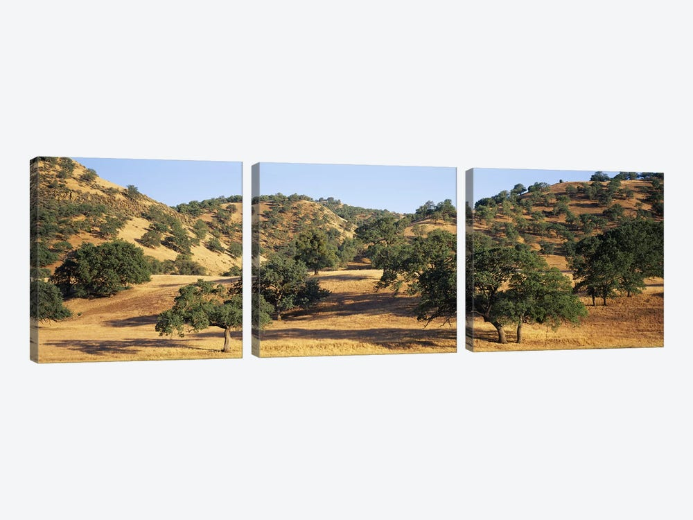 Hillside Landscape, Stanislaus County, California, USA by Panoramic Images 3-piece Canvas Art