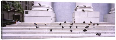 Flock of pigeons on steps, San Francisco, California, USA Canvas Art Print
