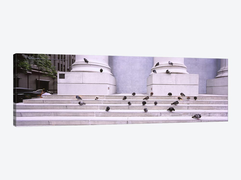 Flock of pigeons on steps, San Francisco, California, USA by Panoramic Images 1-piece Canvas Art