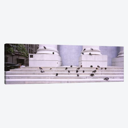 Flock of pigeons on steps, San Francisco, California, USA Canvas Print #PIM6483} by Panoramic Images Canvas Art