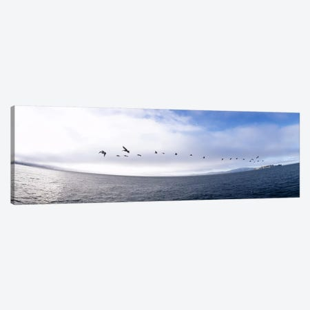 Pelicans flying over the sea, Alcatraz, San Francisco, California, USA Canvas Print #PIM6486} by Panoramic Images Canvas Art Print