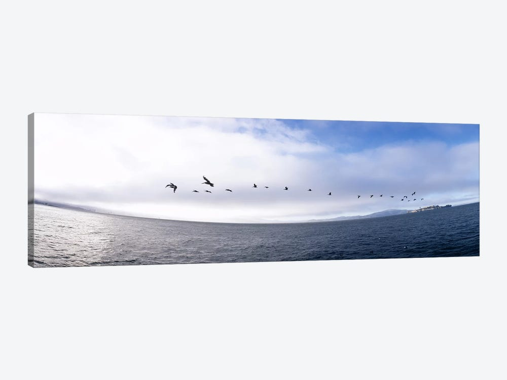 Pelicans flying over the sea, Alcatraz, San Francisco, California, USA by Panoramic Images 1-piece Canvas Print