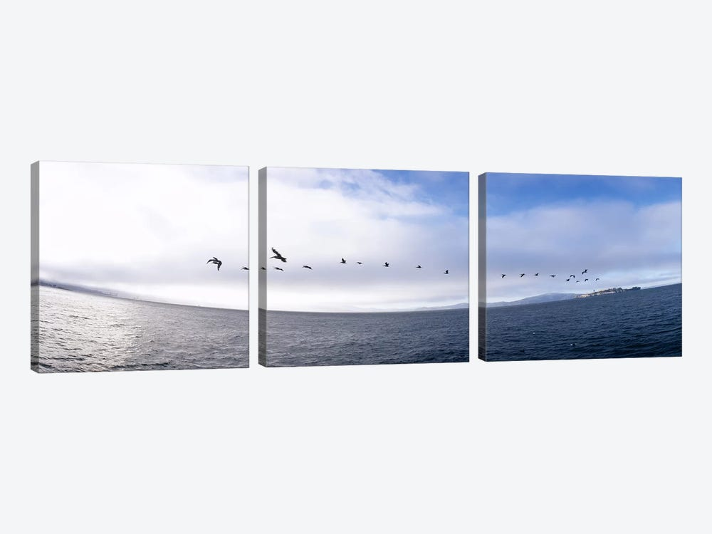 Pelicans flying over the sea, Alcatraz, San Francisco, California, USA by Panoramic Images 3-piece Art Print