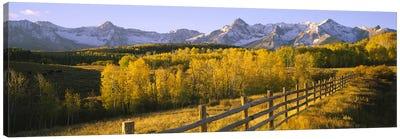 Trees in a field near a wooden fenceDallas Divide, San Juan Mountains, Colorado, USA Canvas Print #PIM6509