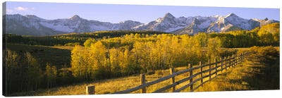 Trees in a field near a wooden fenceDallas Divide, San Juan Mountains, Colorado, USA Canvas Art Print