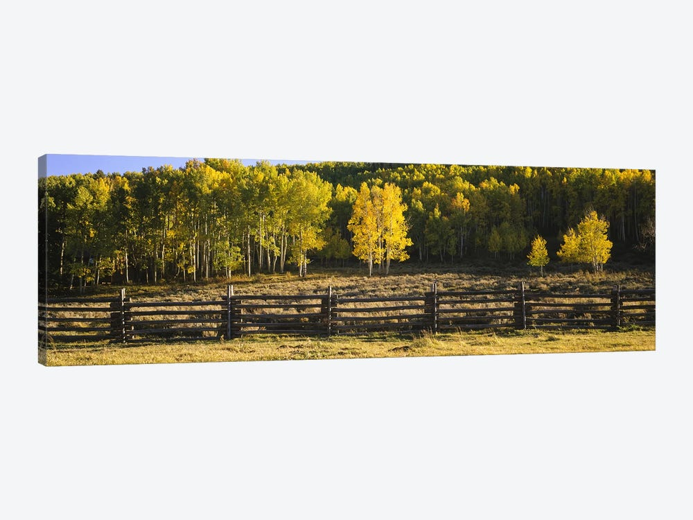 Wooden Fence In An Autumnal Forest Landscape, San Miguel County, Colorado, USA by Panoramic Images 1-piece Canvas Artwork