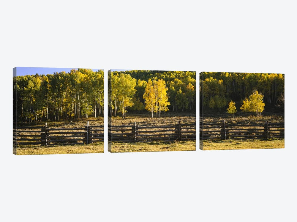 Wooden Fence In An Autumnal Forest Landscape, San Miguel County, Colorado, USA by Panoramic Images 3-piece Canvas Art