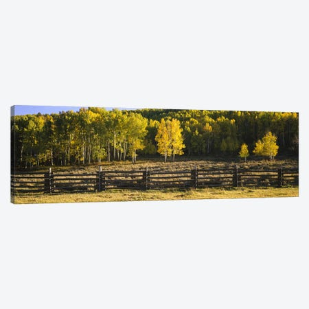 Wooden Fence In An Autumnal Forest Landscape, San Miguel County, Colorado, USA Canvas Print #PIM6511} by Panoramic Images Canvas Artwork