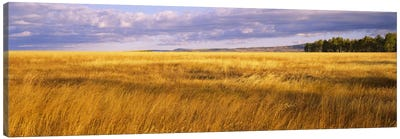 Crop in a fieldLast Dollar Road, Dallas Divide, Colorado, USA Canvas Art Print