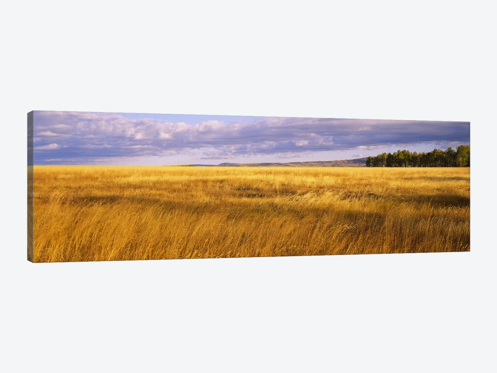 Crop in a fieldLast Dollar Road, Dallas Divide, Colorado, USA by Panoramic Images 1-piece Canvas Wall Art