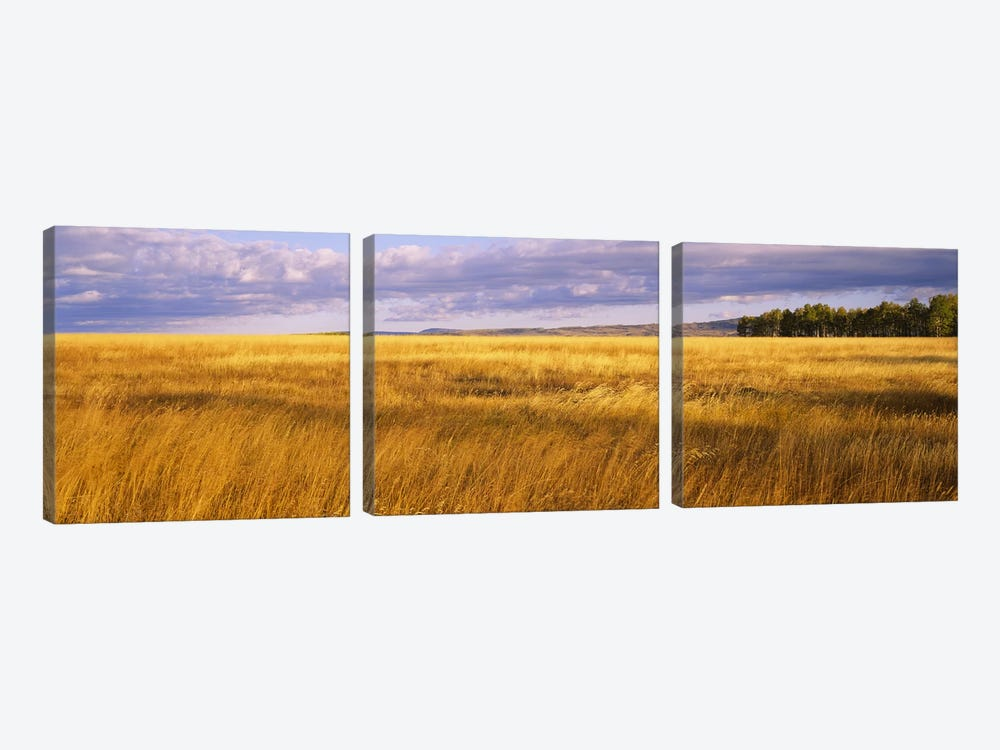 Crop in a fieldLast Dollar Road, Dallas Divide, Colorado, USA by Panoramic Images 3-piece Canvas Wall Art