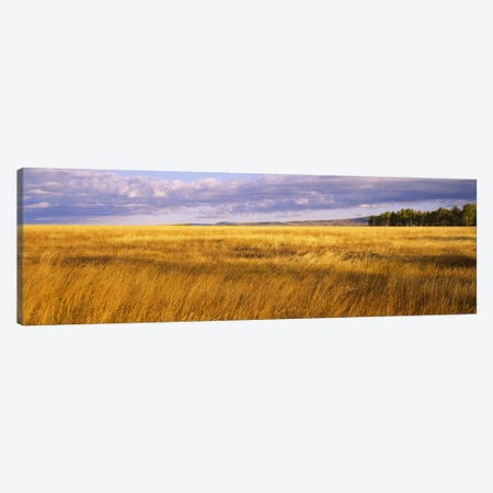 Crop in a fieldLast Dollar Road, Dallas Divide, Colorado, USA Canvas Print #PIM6513} by Panoramic Images Canvas Wall Art