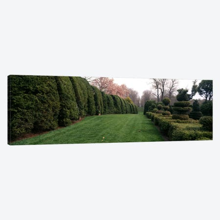 Hedge in a formal gardenLadew Topiary Gardens, Monkton, Baltimore County, Maryland, USA Canvas Print #PIM6515} by Panoramic Images Canvas Art Print