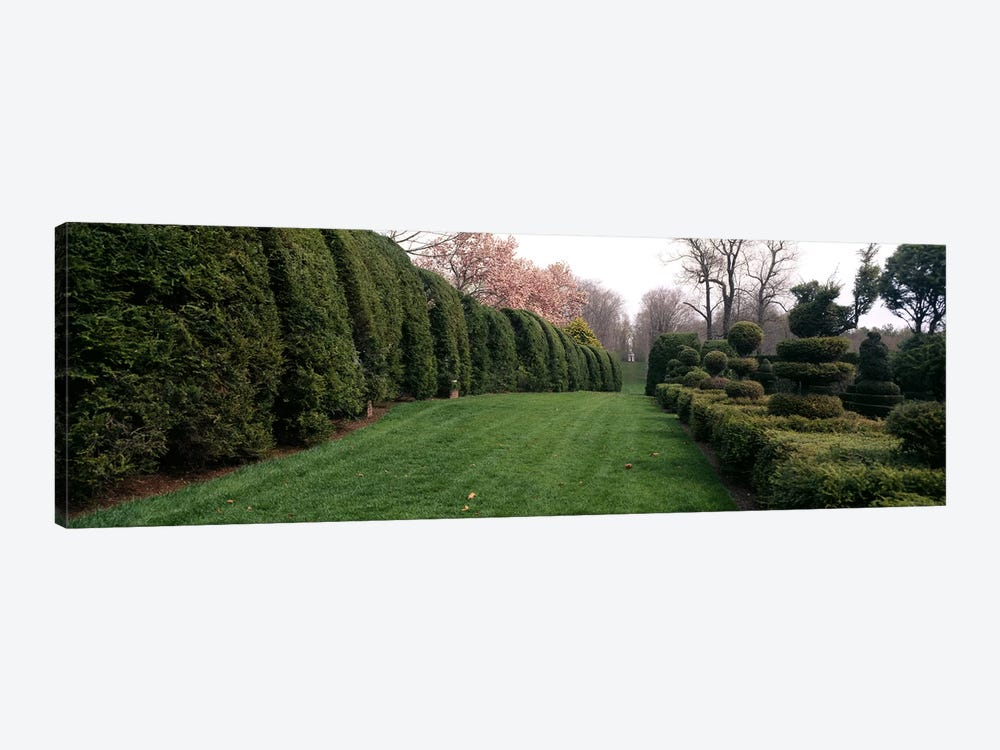 Hedge in a formal gardenLadew Topiary Gardens, Monkton, Baltimore County, Maryland, USA by Panoramic Images 1-piece Canvas Wall Art