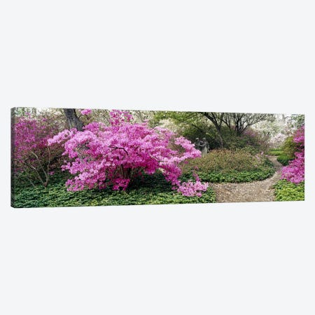 Azalea flowers in a gardenGarden of Eden, Ladew Topiary Gardens, Monkton, Baltimore County, Maryland, USA Canvas Print #PIM6517} by Panoramic Images Art Print