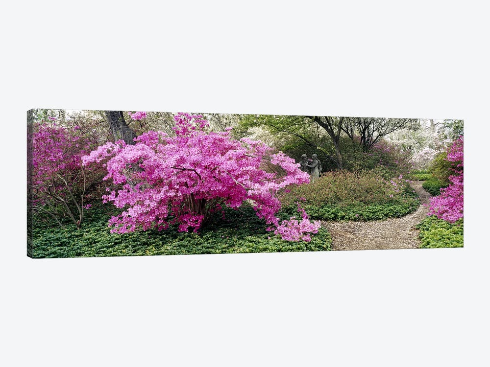 Azalea flowers in a gardenGarden of Eden, Ladew Topiary Gardens, Monkton, Baltimore County, Maryland, USA 1-piece Canvas Wall Art