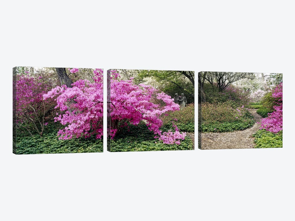 Azalea flowers in a gardenGarden of Eden, Ladew Topiary Gardens, Monkton, Baltimore County, Maryland, USA by Panoramic Images 3-piece Canvas Wall Art