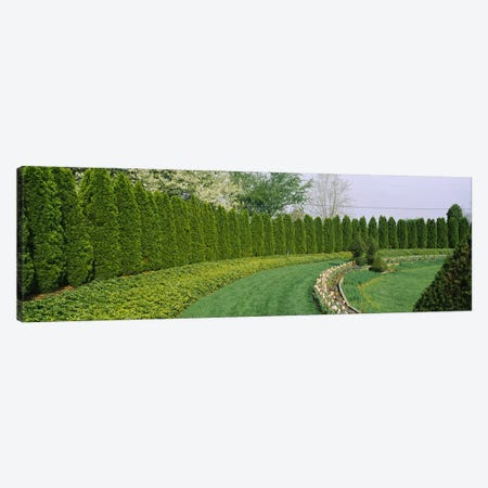 Row of arbor vitae trees in a gardenLadew Topiary Gardens, Monkton, Baltimore County, Maryland, USA Canvas Print #PIM6538} by Panoramic Images Canvas Art