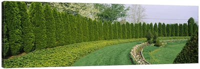 Row of arbor vitae trees in a gardenLadew Topiary Gardens, Monkton, Baltimore County, Maryland, USA Canvas Print #PIM6538