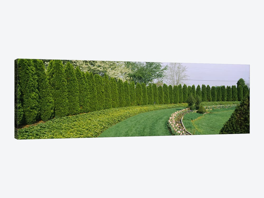 Row of arbor vitae trees in a gardenLadew Topiary Gardens, Monkton, Baltimore County, Maryland, USA 1-piece Art Print