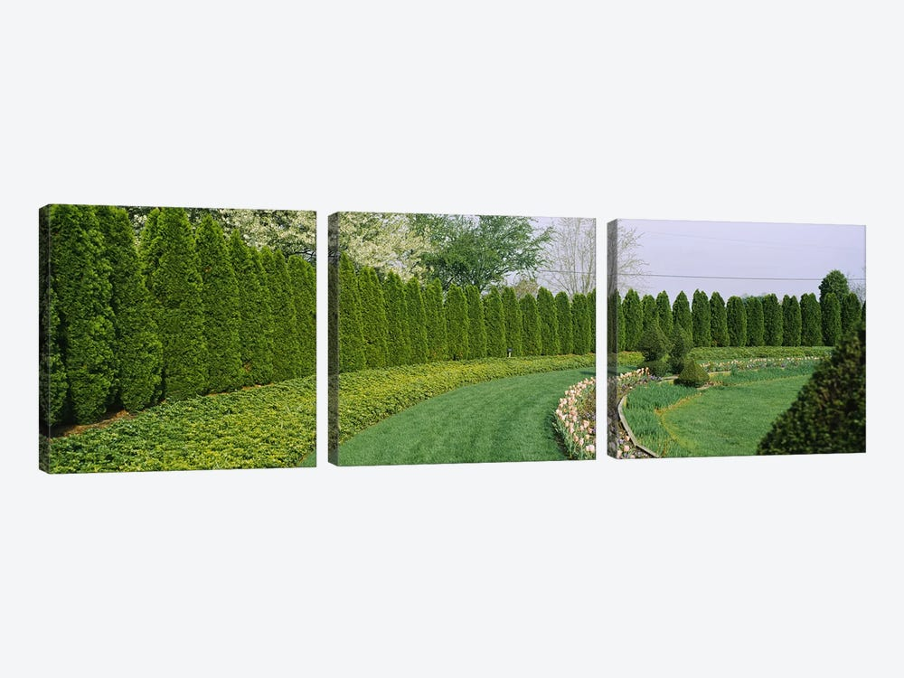 Row of arbor vitae trees in a gardenLadew Topiary Gardens, Monkton, Baltimore County, Maryland, USA 3-piece Canvas Print