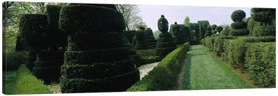 Sculptures formed from trees and plants in a garden, Ladew Topiary Gardens, Monkton, Baltimore County, Maryland, USA Canvas Print #PIM6539