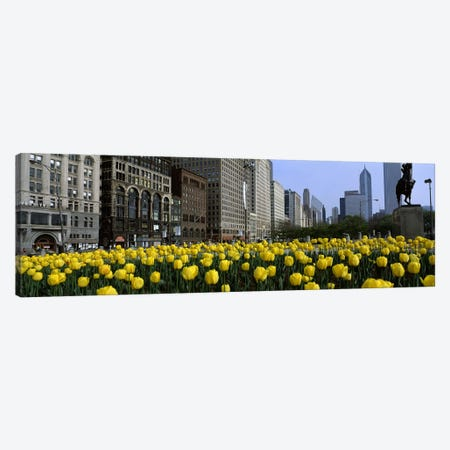 Tulip flowers in a park with buildings in the background, Grant Park, South Michigan Avenue, Chicago, Cook County, Illinois, USA Canvas Print #PIM6545} by Panoramic Images Canvas Wall Art