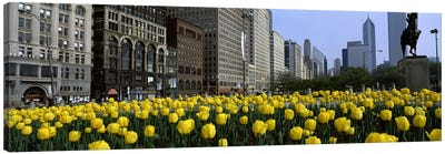 Tulip flowers in a park with buildings in the background, Grant Park, South Michigan Avenue, Chicago, Cook County, Illinois, USA Canvas Art Print