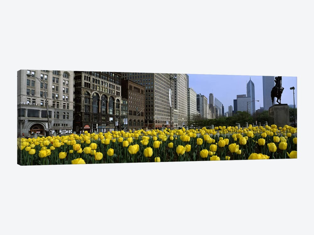 Tulip flowers in a park with buildings in the background, Grant Park, South Michigan Avenue, Chicago, Cook County, Illinois, USA by Panoramic Images 1-piece Art Print