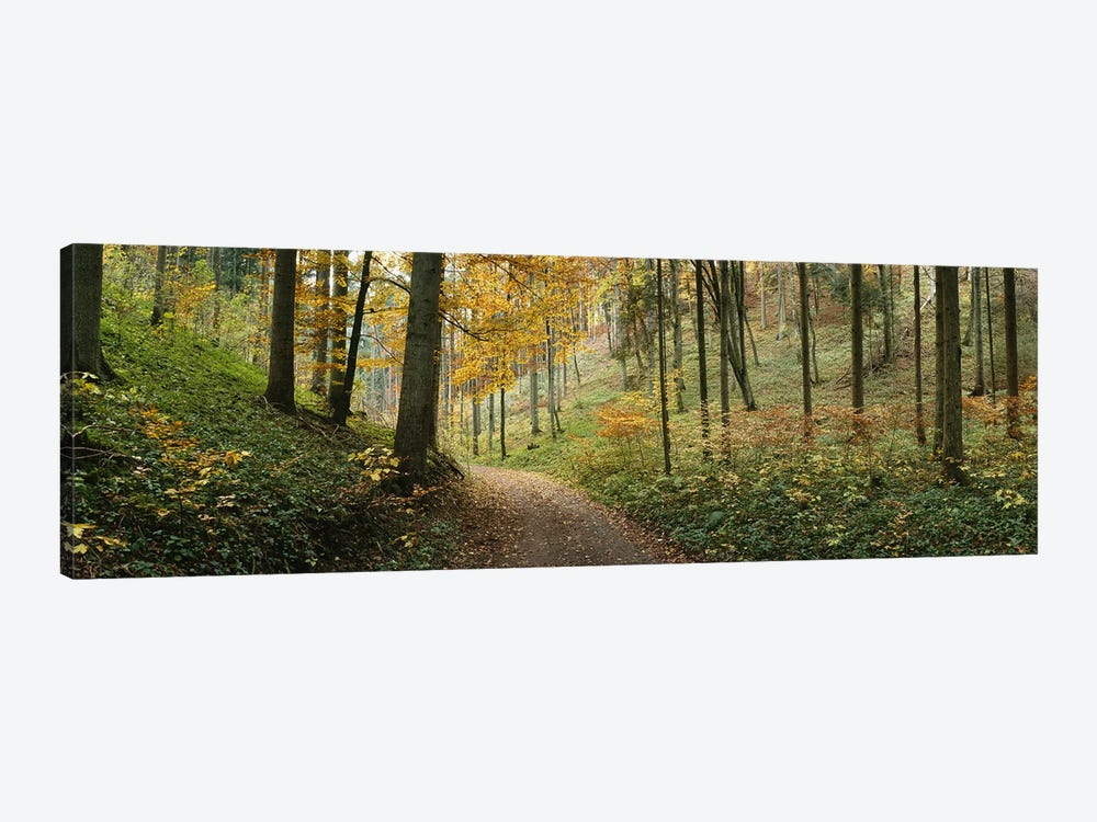 Road Through An Autumnal Forest Landscape, Baden-Wurttemberg, Germany by Panoramic Images 1-piece Canvas Artwork