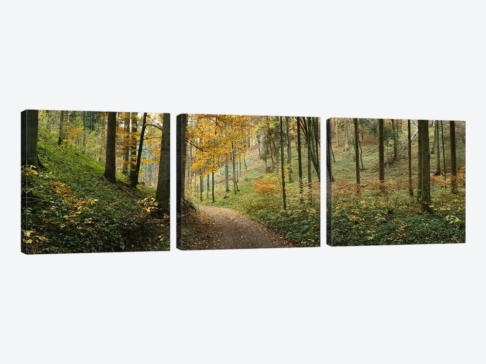 Road Through An Autumnal Forest Landscape, Baden-Wurttemberg, Germany by Panoramic Images 3-piece Canvas Artwork