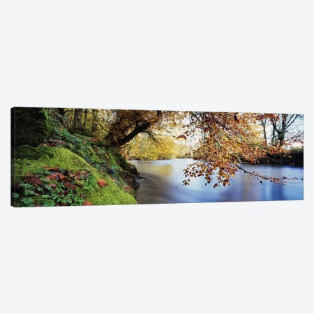 Trees along a riverRiver Dart, Bickleigh, Mid Devon, Devon, England Canvas Print #PIM6580} by Panoramic Images Canvas Print