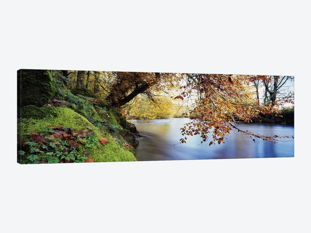 Trees along a riverRiver Dart, Bickleigh, Mid Devon, Devon, England 1-piece Canvas Wall Art