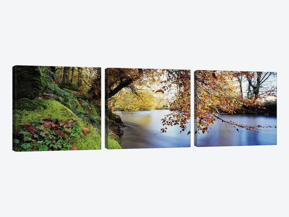 Trees along a riverRiver Dart, Bickleigh, Mid Devon, Devon, England 3-piece Canvas Wall Art