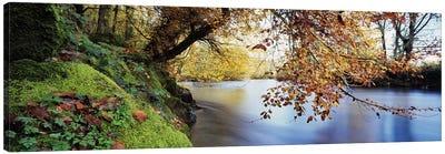 Trees along a riverRiver Dart, Bickleigh, Mid Devon, Devon, England Canvas Art Print