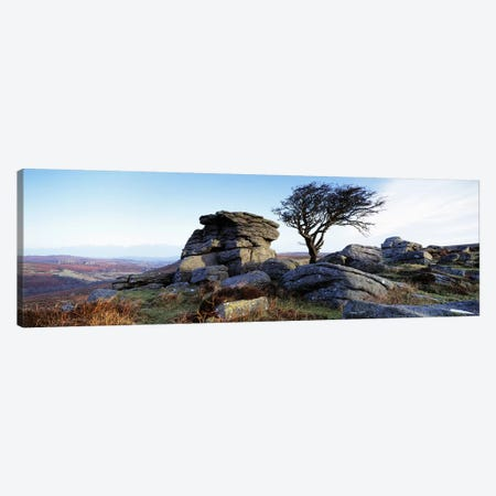 Bare tree near rocks, Haytor Rocks, Dartmoor, Devon, England Canvas Print #PIM6588} by Panoramic Images Canvas Art Print