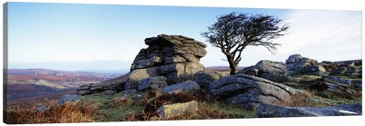 Bare tree near rocks, Haytor Rocks, Dartmoor, Devon, England Canvas Art Print