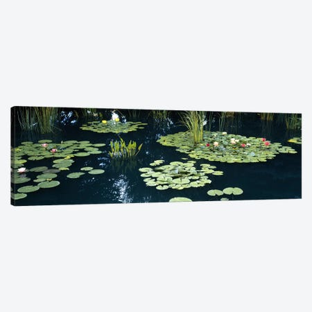 Water lilies in a pond, Denver Botanic Gardens, Denver, Colorado, USA Canvas Print #PIM6631} by Panoramic Images Art Print