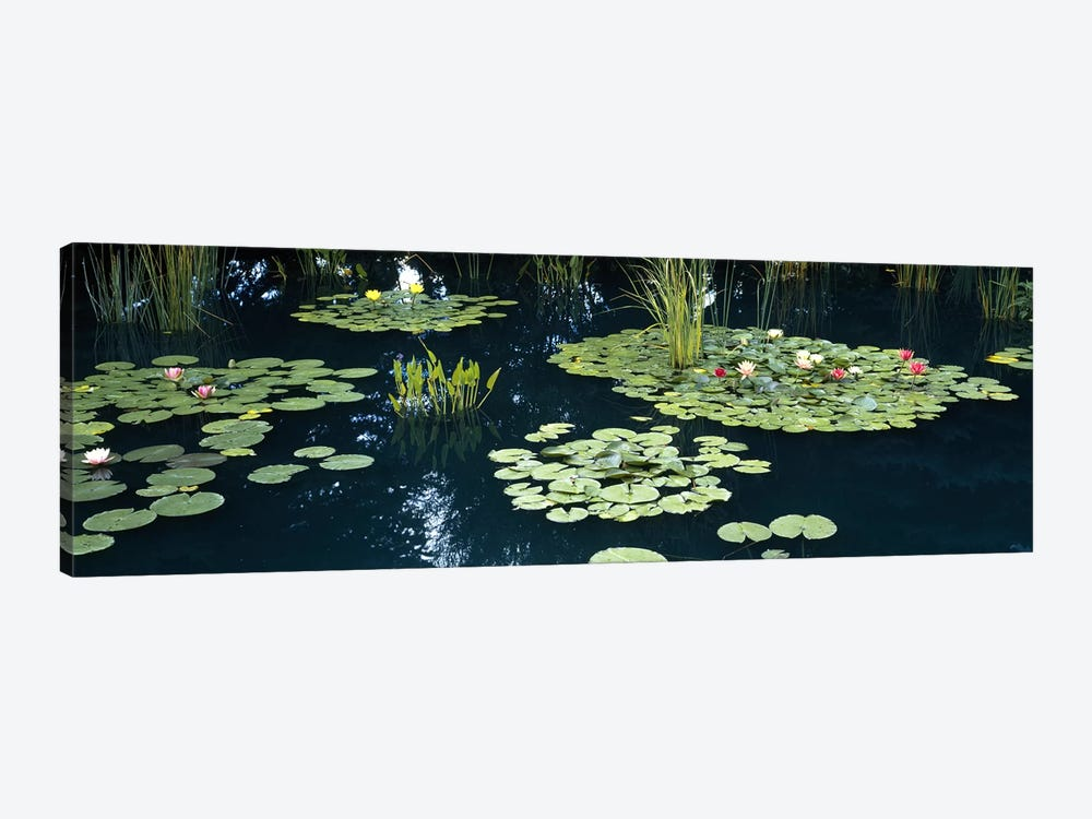 Water lilies in a pond, Denver Botanic Gardens, Denver, Colorado, USA by Panoramic Images 1-piece Canvas Artwork