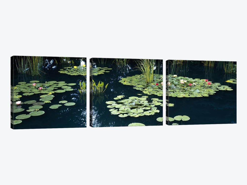 Water lilies in a pond, Denver Botanic Gardens, Denver, Colorado, USA by Panoramic Images 3-piece Canvas Artwork