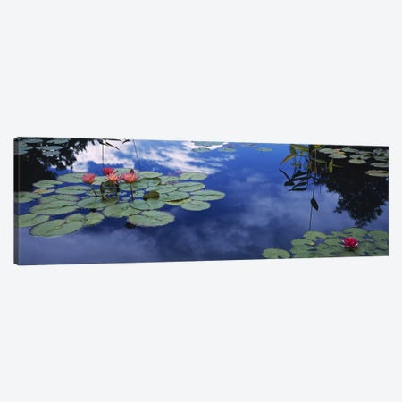 Water lilies in a pond, Denver Botanic Gardens, Denver, Denver County, Colorado, USA Canvas Print #PIM6632} by Panoramic Images Canvas Art Print