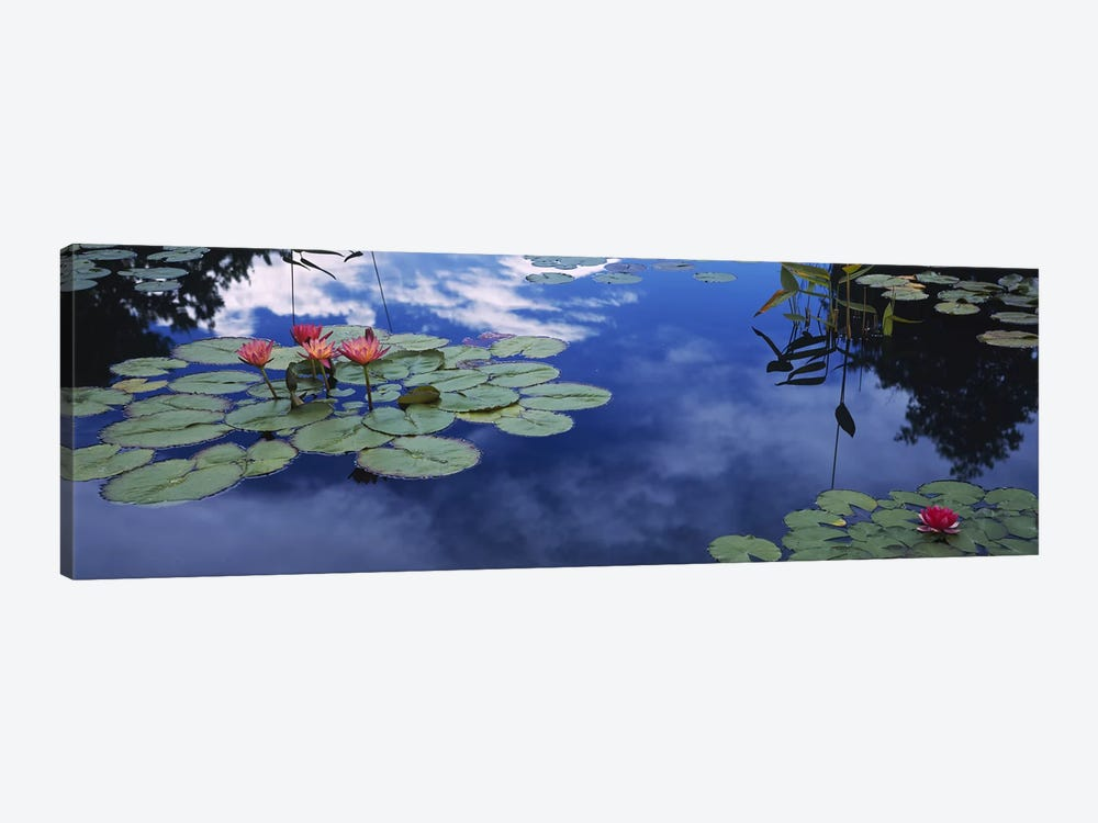 Water lilies in a pond, Denver Botanic Gardens, Denver, Denver County, Colorado, USA by Panoramic Images 1-piece Art Print