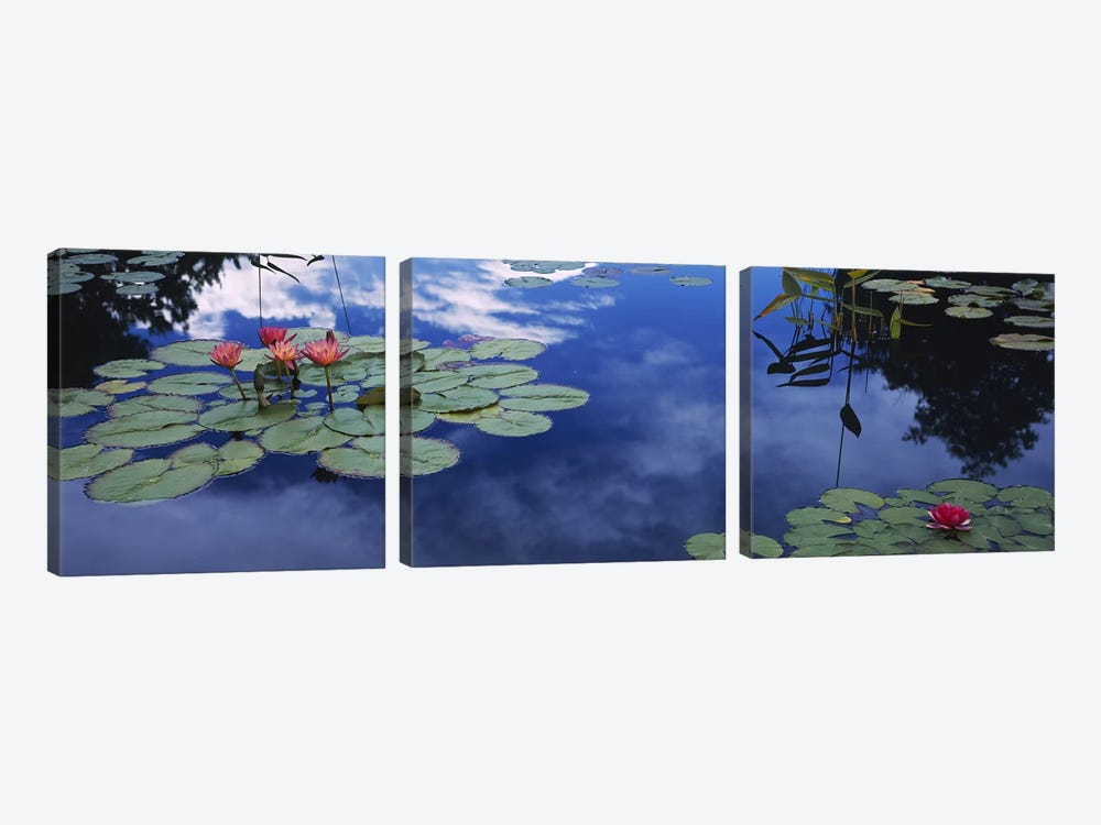 Water lilies in a pond, Denver Botanic Gardens, Denver, Denver County, Colorado, USA by Panoramic Images 3-piece Canvas Print