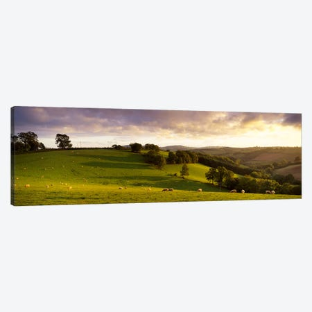 High angle view of sheep grazing in a fieldBickleigh, Mid Devon, Devon, England Canvas Print #PIM6663} by Panoramic Images Canvas Wall Art
