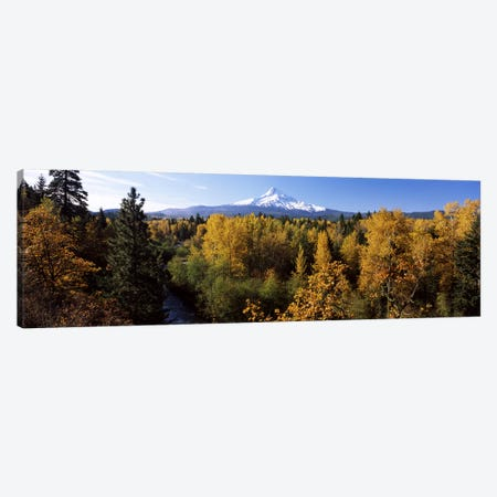 Cottonwood trees in a forest, Mt Hood, Hood River, Mt. Hood National Forest, Oregon, USA Canvas Print #PIM6668} by Panoramic Images Canvas Wall Art