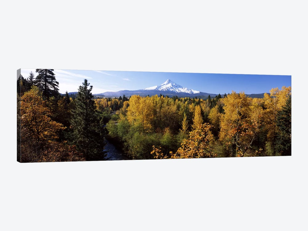 Cottonwood trees in a forest, Mt Hood, Hood River, Mt. Hood National Forest, Oregon, USA by Panoramic Images 1-piece Canvas Wall Art